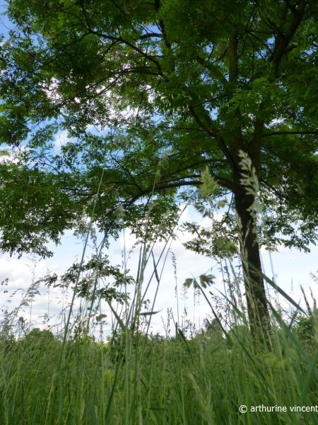 Couchée dans l'herbe