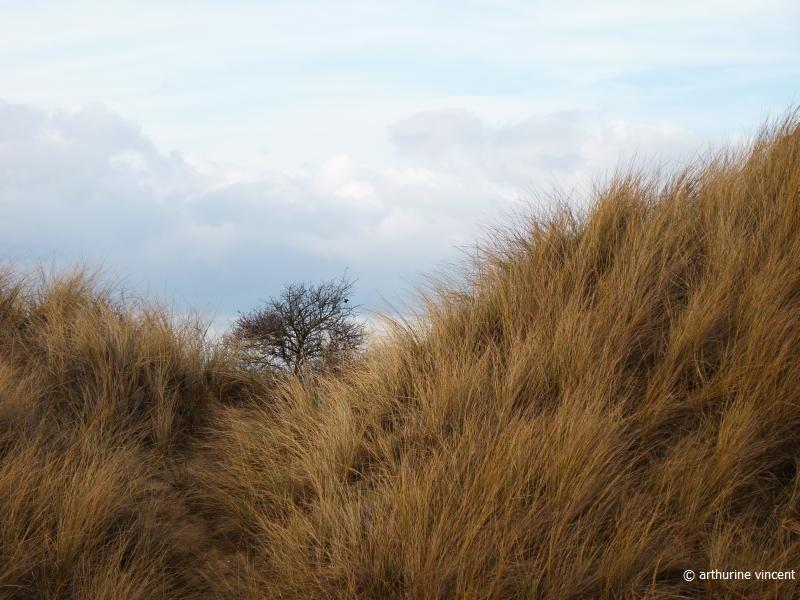 L'arbre dans les dunes