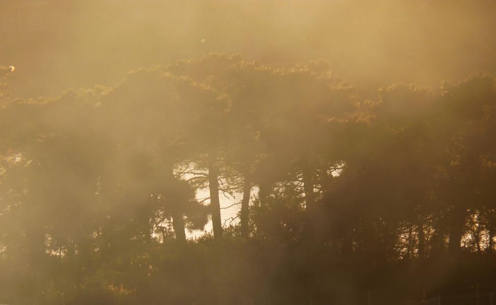 arbres dans la brume