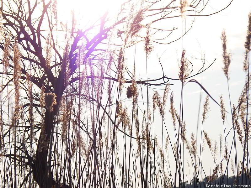 Près du lac