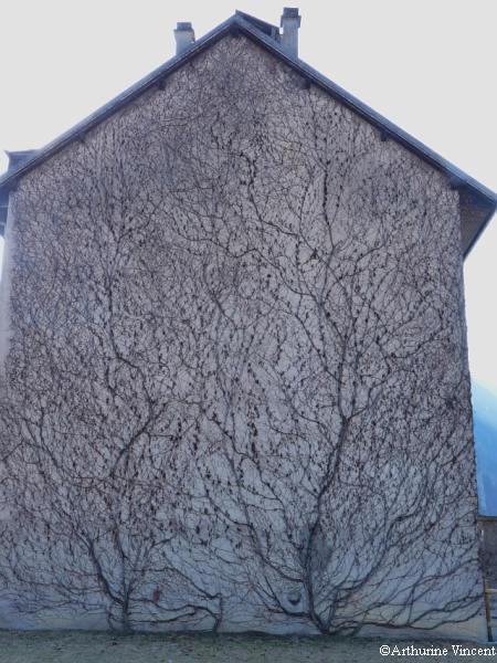 La façade aux mille branches