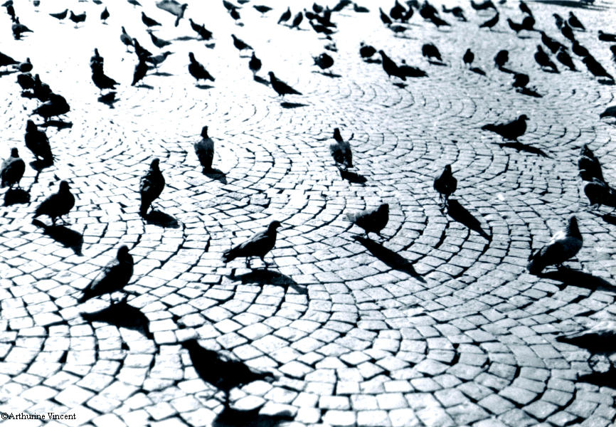 Les pigeons d'Amsterdam